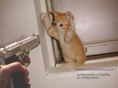 [IMG]http://www.manuscritto.it/images/gattino_attentatore.jpg[/IMG]